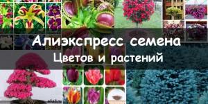 семена алиэкспресс растения