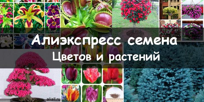 как сделать семена цветов